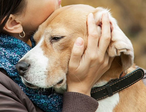 Explore Pet Therapy for Your Funeral Home Business